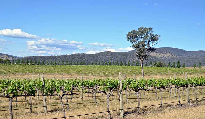 What can Mudgee offer investors that Orange can't?