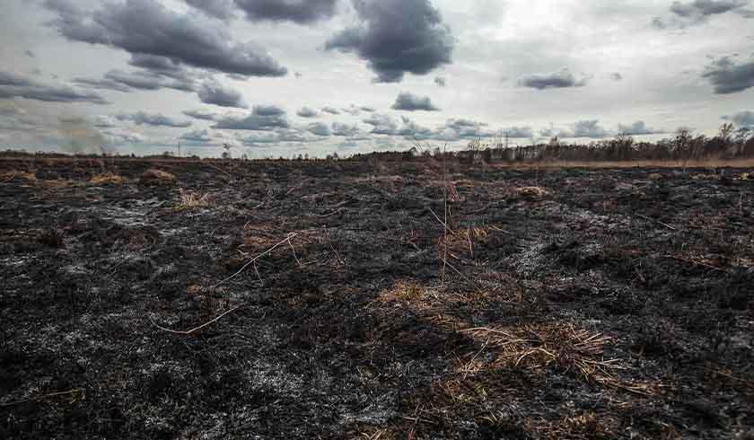 Burned out land