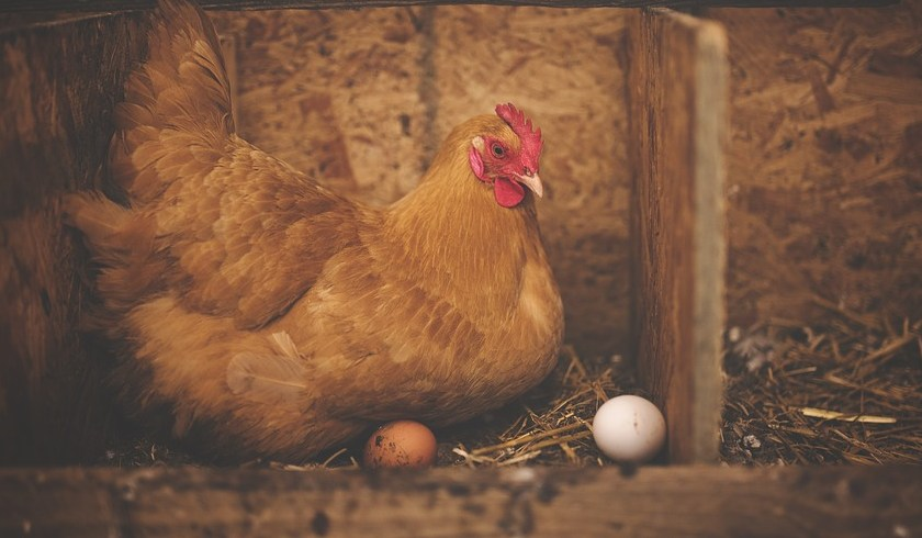 Chicken and egg, what came first, falling markets or falling investor
