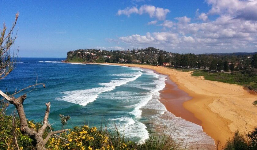sydney northern beaches property investment newport landscape