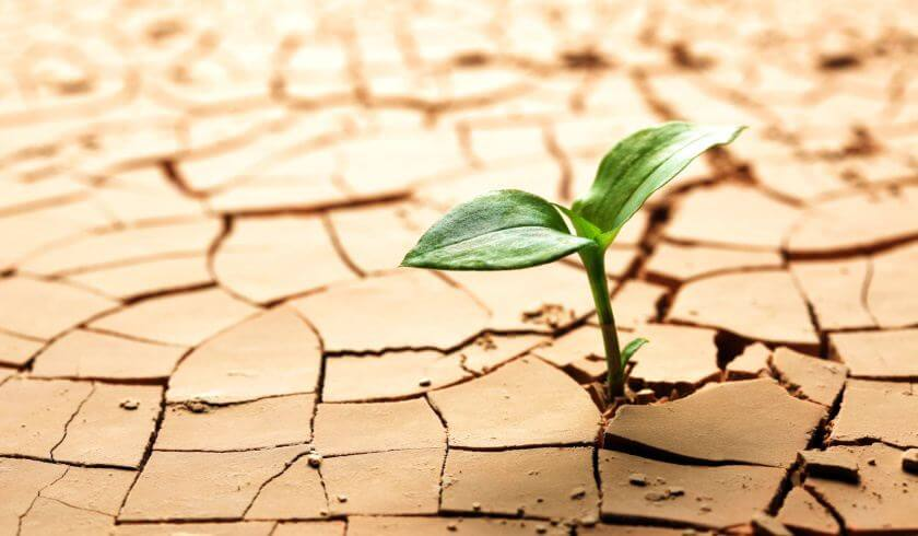 sydney melbourne recover predictions green leaf on dry soil