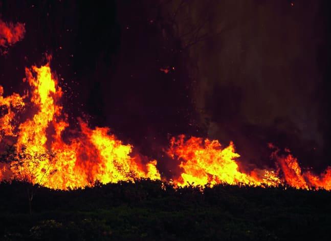 Investing in bushfire regions
